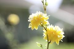 IMG_0219_garden