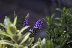 IMG_2261_garden